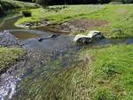 Turtle Pond Creek Meets Sinbad Creek