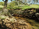 Tree Root Spot near Turtle Pond